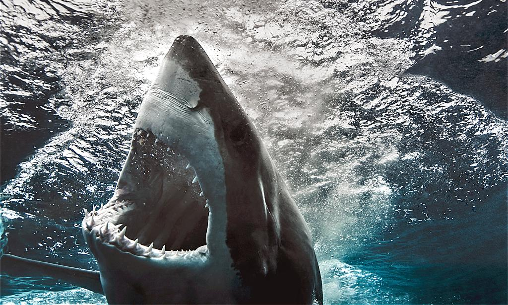 Sink your teeth into these six shark-tastic strains for #SharkWeek! #cannabis