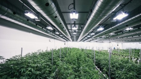 Medical marijuana producers seek alternatives as Canada Post work stoppage looms