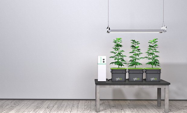 Cannabis Joins the Internet of Things. Now its Easy for Everyone to Grow  #IoT