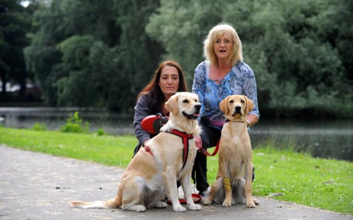 Dogs fall ill after eating discarded cannabis in a park