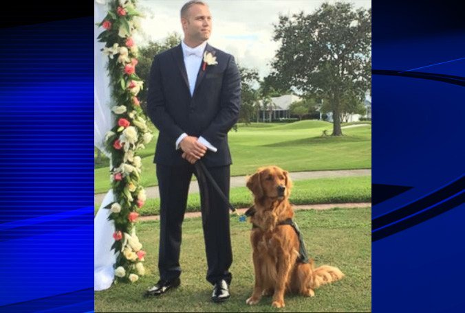 #Tampa nonprofit trains service dogs for wounded veterans
