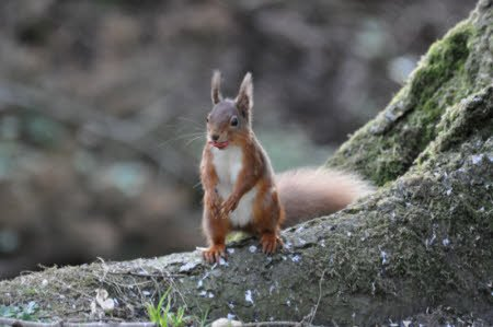 Do you remember that magic moment when you first saw a red squirrel?
