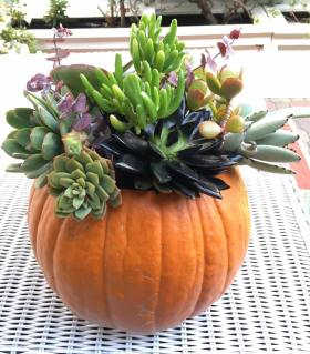 I show you how to make a Pumpkin Succulent Centerpiece for your table! DIY HomeDecor