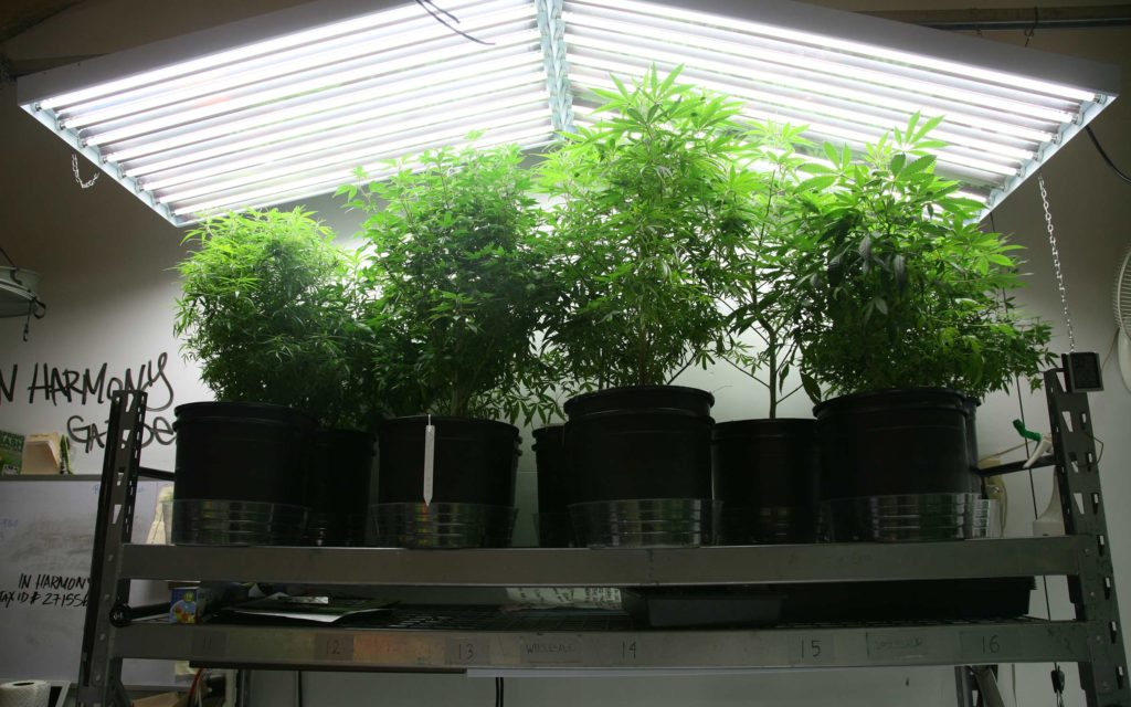 #READ Grow Q&A: Can I Flower My Pot Plants With Fluorescent Lights?