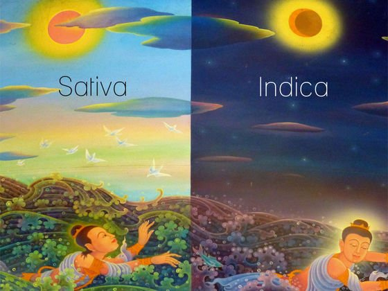 #Quiz: Indica vs. Sativa: let's see what your personality is most like.