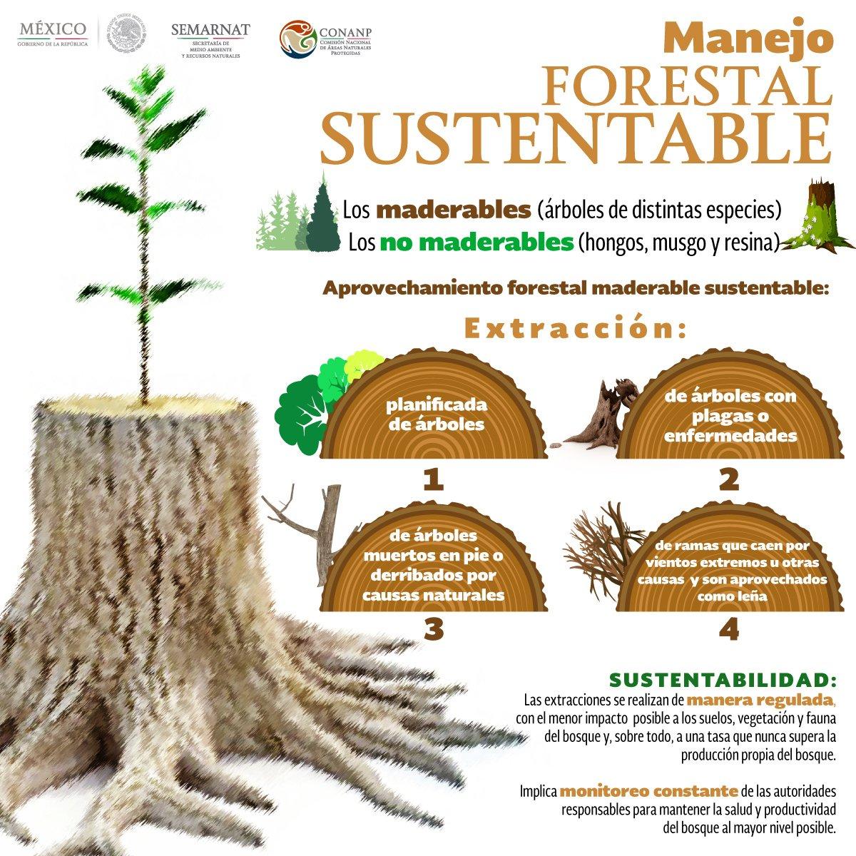 Resultado de imagen para bosque sustentable infografia