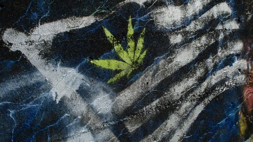 After #ElectionDay, Access to Marijuana Likely to Reach All-Time High
