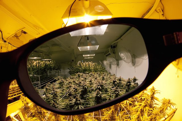 Blinded By The Light. Grow Q&A: How Can I Protect My Eyes In My Marijuana Growroom?