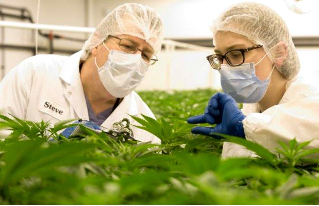 #pot Ex-Big Pharma Executive Behind OxyContin Sells Medical Marijuana  via @CannabisCulture