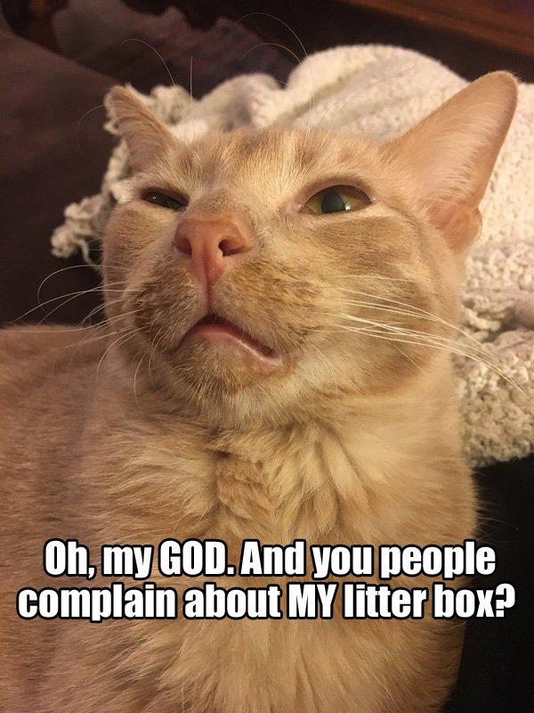 Foz Meadows On Twitter Please Make My Dumb Cat A Reaction Meme