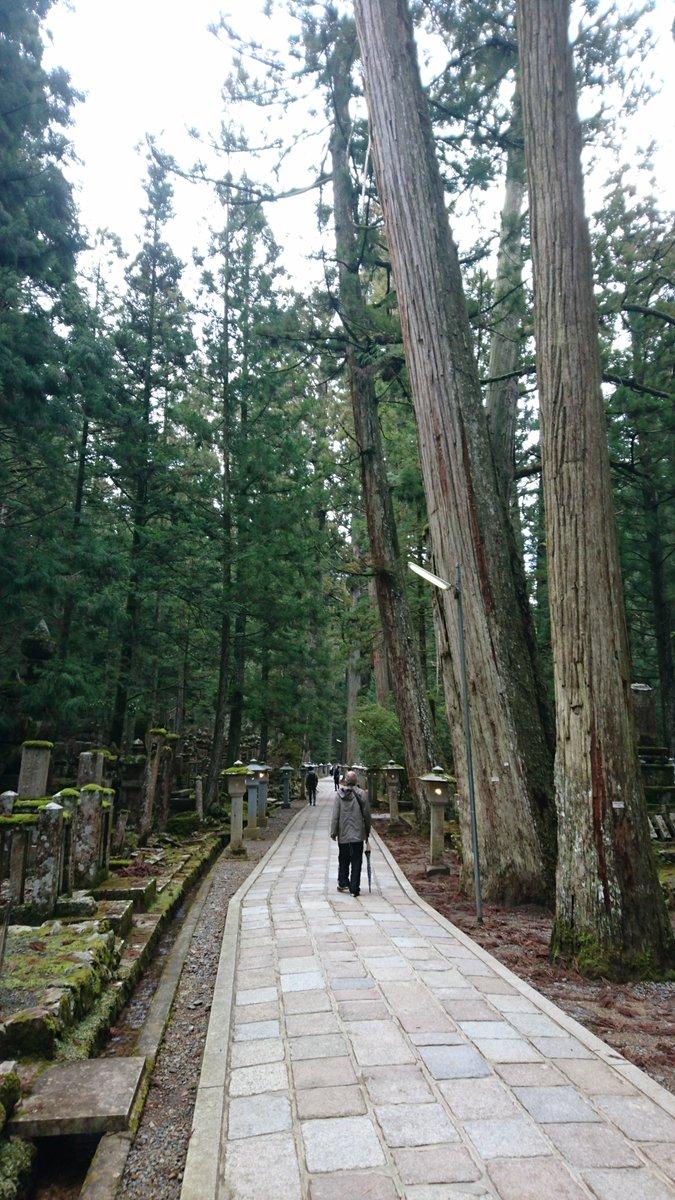 test ツイッターメディア - 高野山本殿への道 一ノ橋から参道の写真。 3月で山の上であるのもあり、気温がまだ低いのですが 参道道中にあるコケが緑で綺麗でした。 周りには墓地もあり、 参拝や信仰の対象になるものは撮影をやめています。 とんでもなく樹齢が高そうな杉の木には、 それだけでありがたさを感じるくらいでした。 https://t.co/jbffUjYTCG