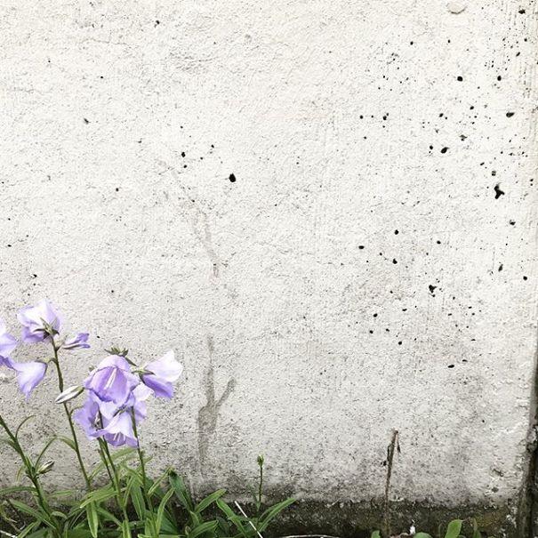 HisaNabe photo