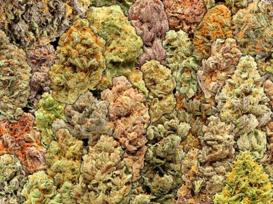 Quiz: Which #Cannabis Strain Should I Grow? Narrow Down The Options Here!
