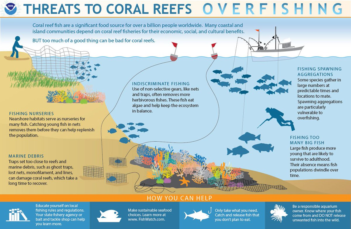 Noaa Coral Program On Twitter How Can You Help Corals
