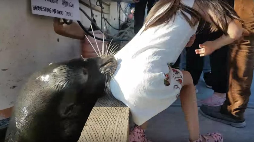 Site where sea lion bodied little girl is now a tourist destination: