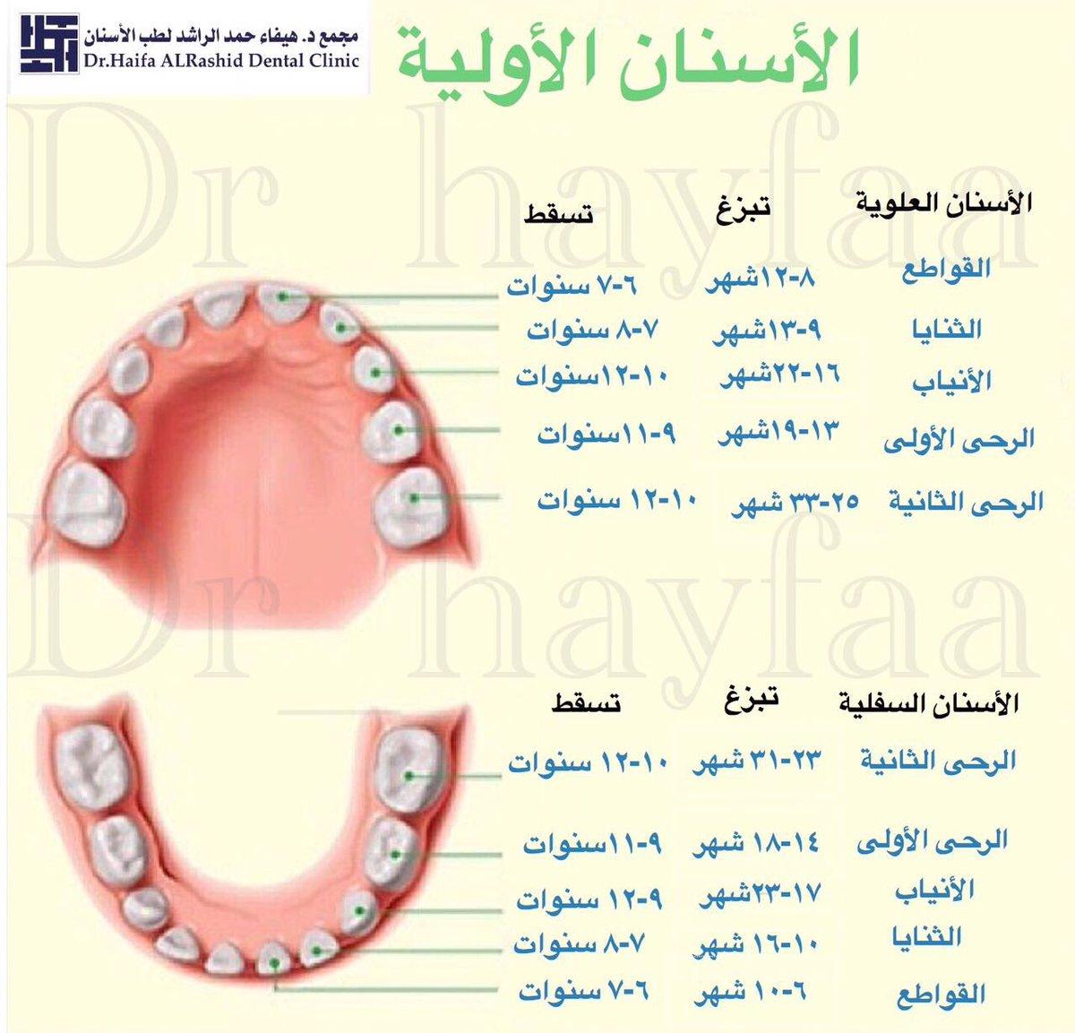 التعرف على النتيجة البحر الاسنان اللبنية Arkansawhogsauce Com