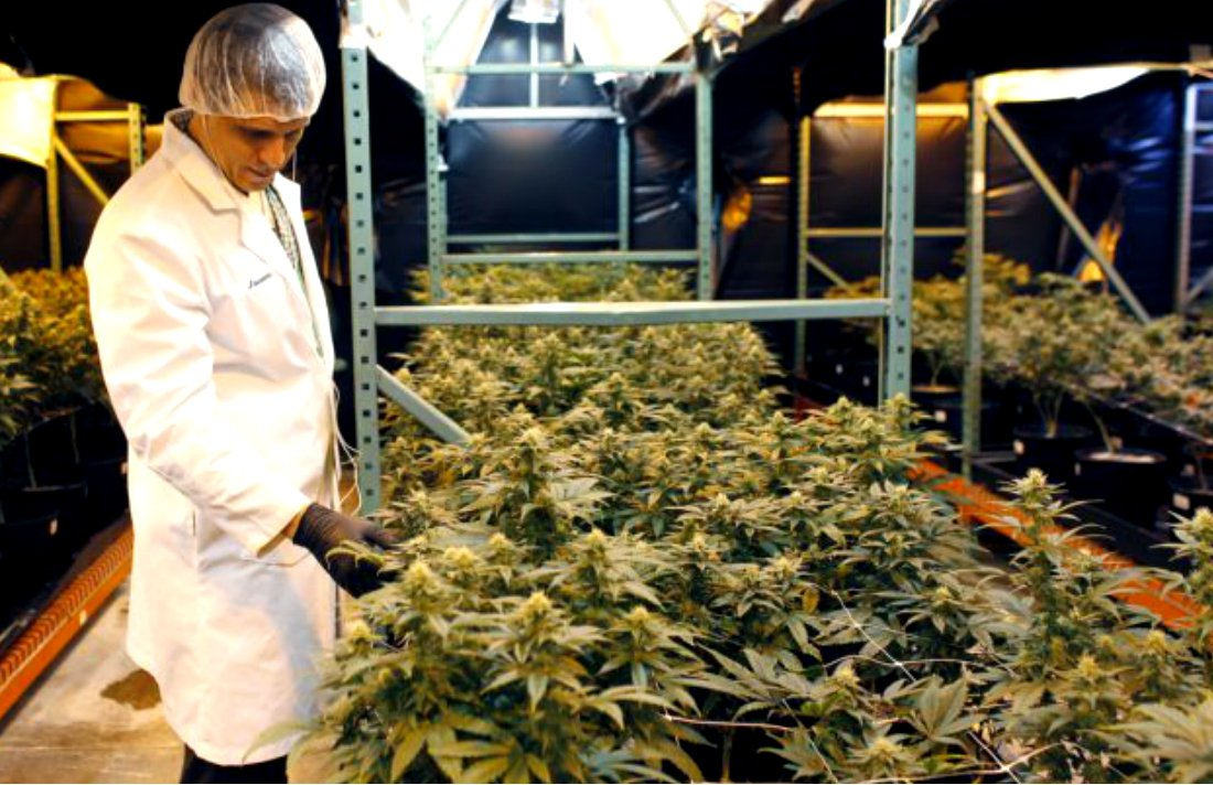 Puerto Rico Betting on Medical Marijuana #puertorico #MMJ #growing #economy