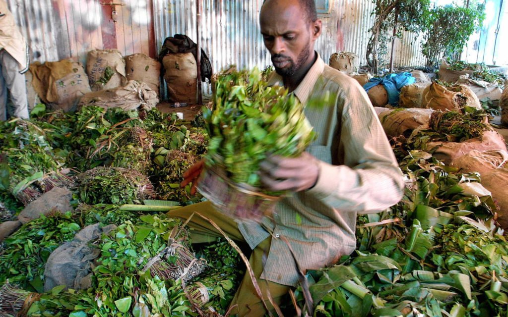 What's Up With #Khat? The Stimulating Herb Continues to Thrive in Independent Somaliland.