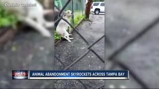 Tampa Bay sees uptick of animal abandonment calls after Hurricane Irma