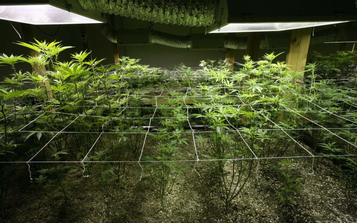 Nico's Nuggets: Young Plant Problems for New Growers.