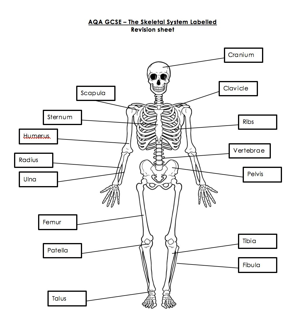 Pe Diagram Worksheet