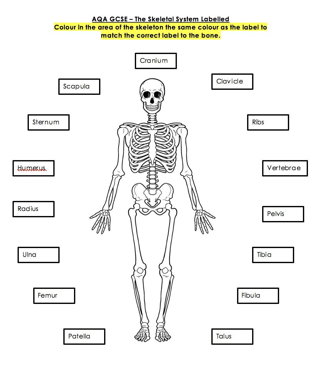 34 Label The Skeleton