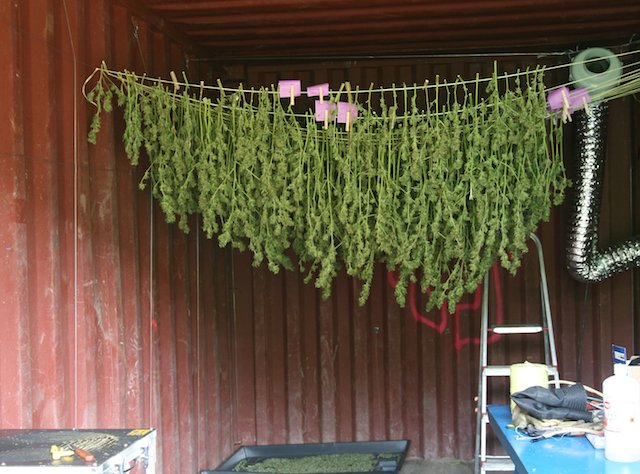 Grow Q&A: Can I Cure My Pot Harvest in Paper Bags?
