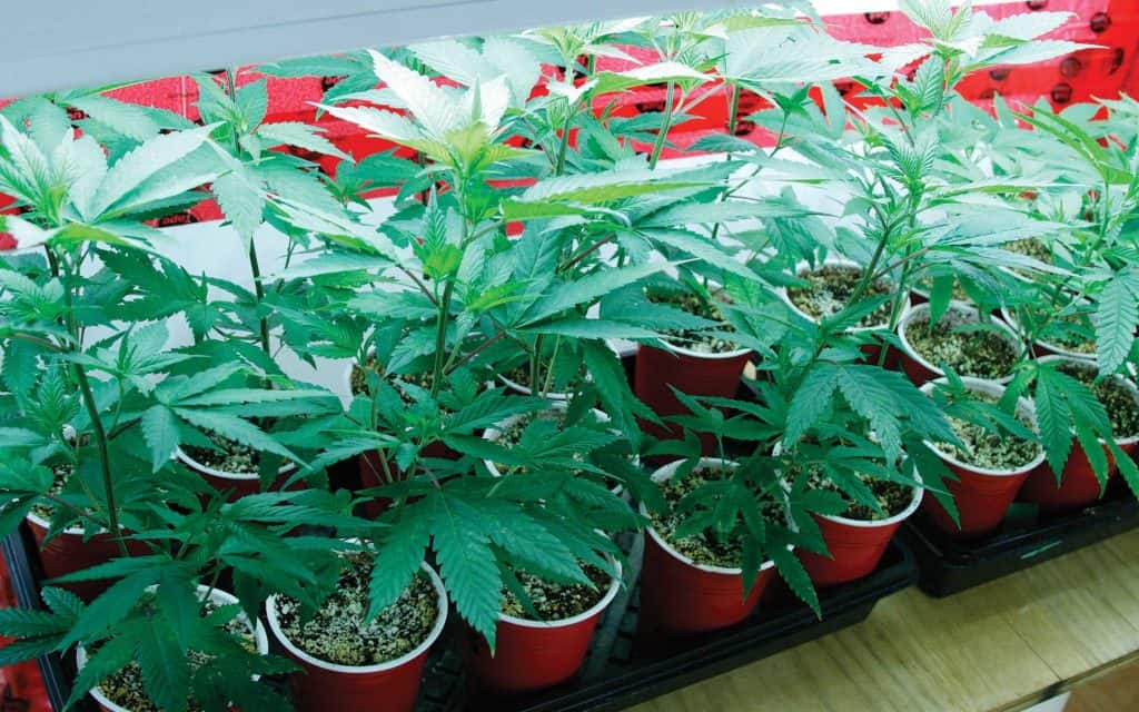 How Zoning Laws Could Subvert Marijuana Legalization.