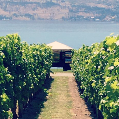 test Twitter Media - Art in the Park - Vineyard Trails is doing another showing. This time @Quails_Gate on Sunday! https://t.co/mdNf3iC7WT https://t.co/CgFQXs3YJc
