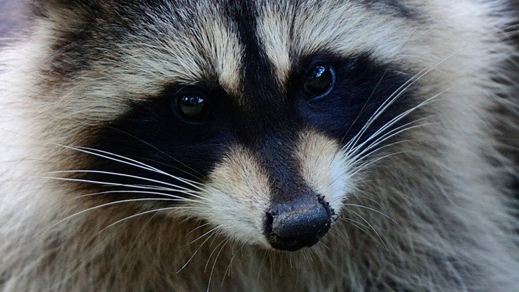 Rabies alert issued for Pasco residents