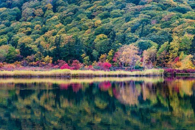 「十和田八幡平国立公園内の蔦沼」の画像検索結果