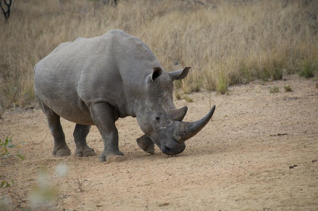 How #IoT technology is being used in Africa to help tackle poaching:  via @BD_Africa #IBMIoT