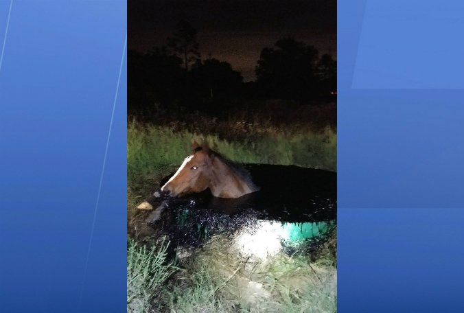 PICTURES: Horse rescued after falling into vat of oil in Texas: