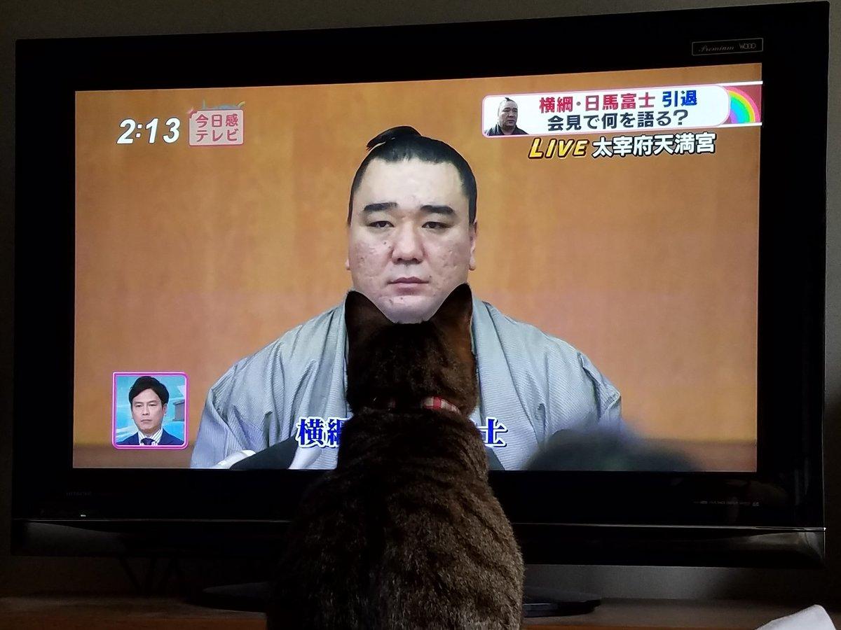 test ツイッターメディア - 日馬富士の顎にぴったりくる猫  https://t.co/pUL05RtNzm