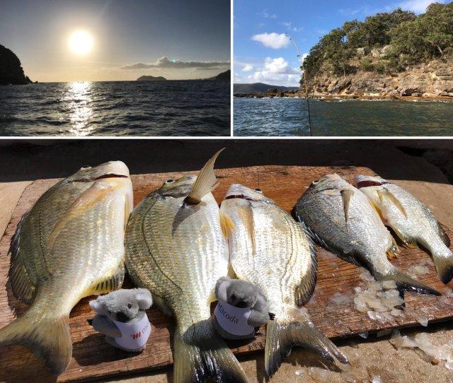 Metacoda On Twitter The Metacoda Koalas Had A Successful Morning Catching Bream On The Hawkesbury River Metacodakoala Fishing