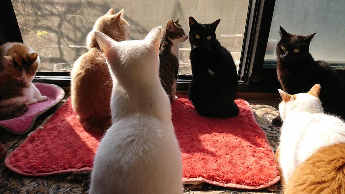 test ツイッターメディア - 時折メンバーチェンジ😸  ずっと 晴れてるといいなあ☀️ お日さま宜しくお願いします🙇 「ママ~❗わたしたちもお願いする~🎵」って黒猫クロワッサン🥐  そういえば 昨夜珍しくクロワッサンとナンナがプロレス大会🗯️ じゃじゃ馬クラブの練習だったのかなあ😕 #猫好きさんと繋がりたい  #猫の日 https://t.co/lZns8iplRW