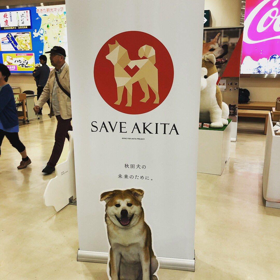 test ツイッターメディア - 秋田空港に秋田犬がいっぱいいたよー! https://t.co/vIx4CQjjY0