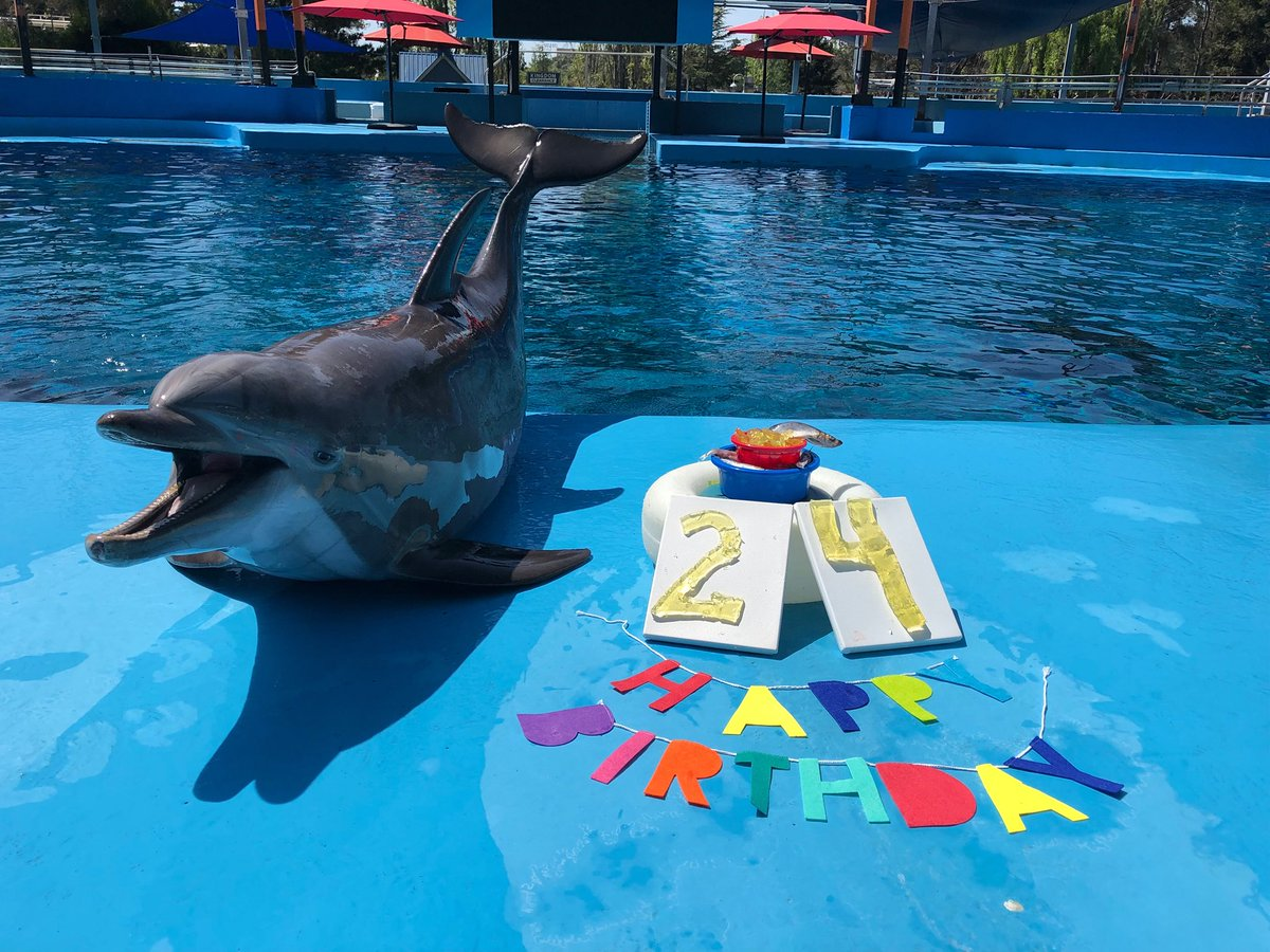 Six Flags Discovery Kingdom On Twitter Happy 24th Birthday To Avalon Looks Like Our Animal Care Specialists Decided To Throw A Little Party