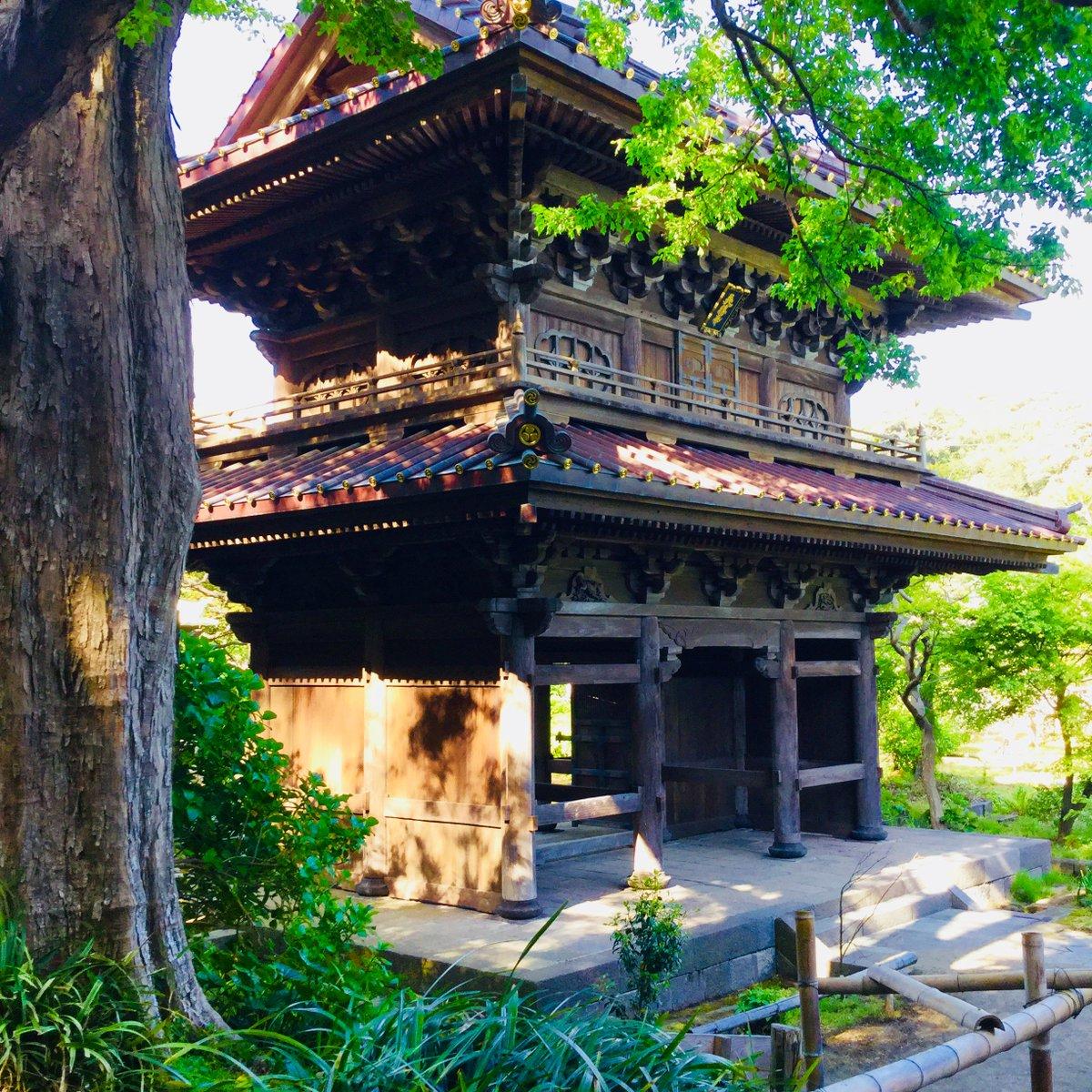 test ツイッターメディア - 【日本遺産】構成文化財ちょこっと紹介シリーズ。 横須賀線の車窓から白壁が見える英勝寺。 一歩中に入ると、落ち着いた品のある佇まいの、鎌倉唯一の尼寺です。 四季折々の花が楽しめますが、今は白藤が見頃です♪ #鎌倉 #花 https://t.co/KbWVgKHxeI