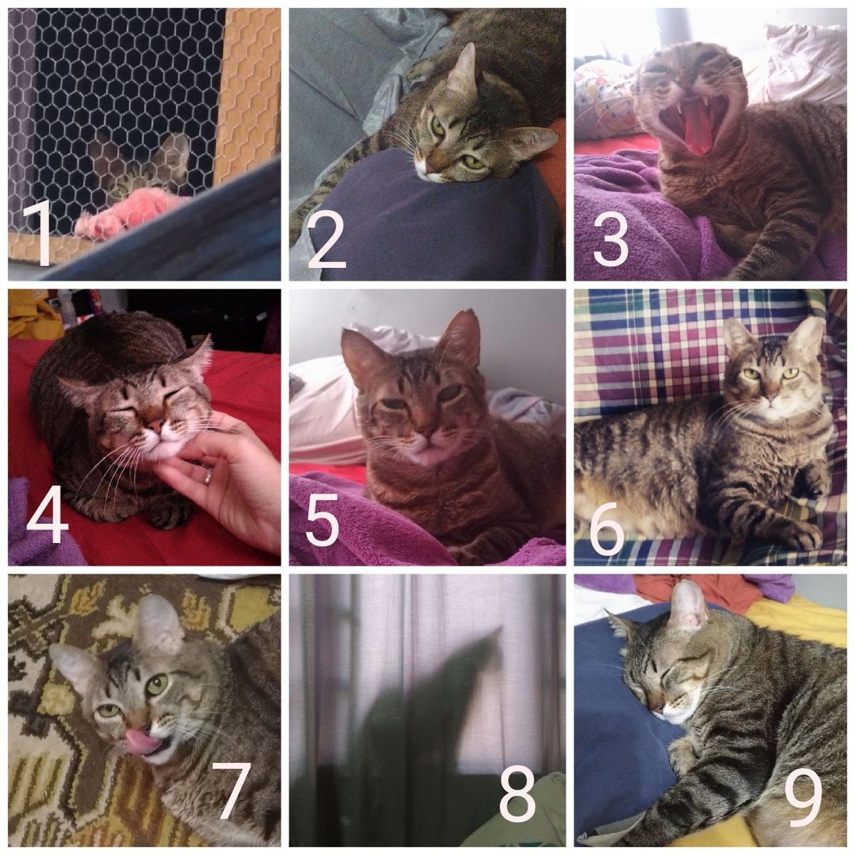 Na Escala De Humor Do Gatinho Rexie Vet Cat Medicina De