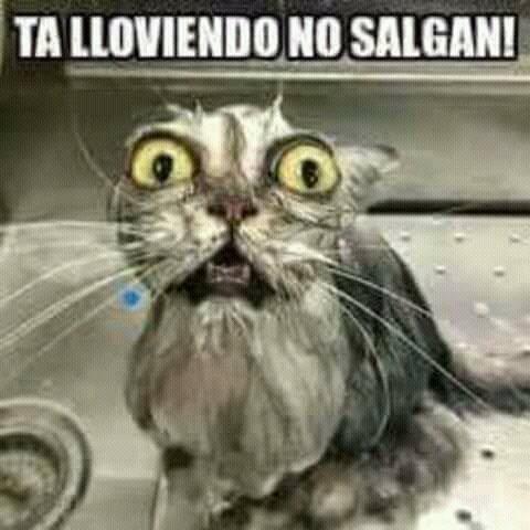 Miguel Angel On Twitter