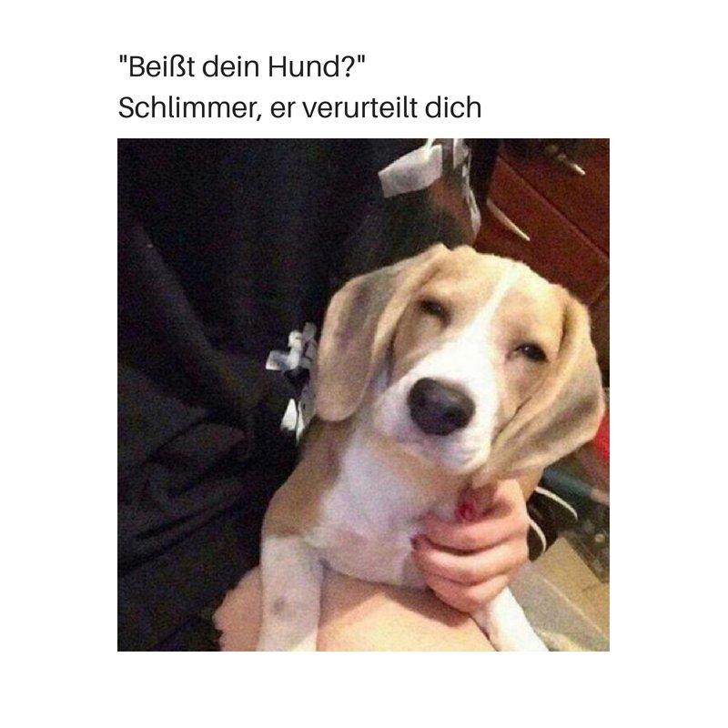 Home Neu Hundart Die Hundeschule Fur Artgerechte Erziehung