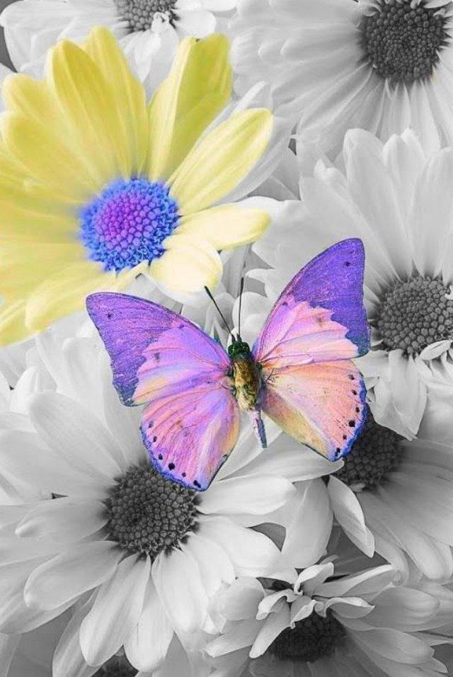 Santina On Twitter Vitasei Come Una Farfalla Che Si è