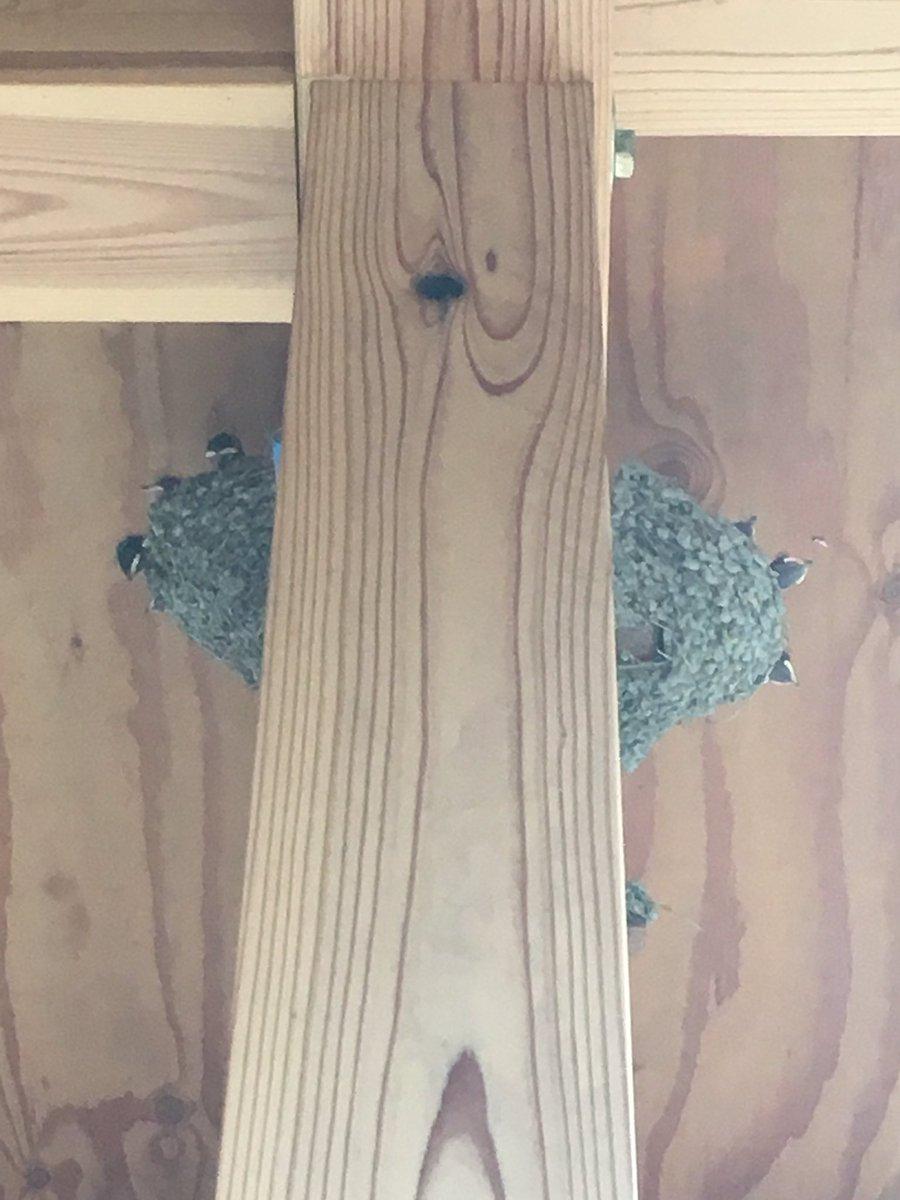 test ツイッターメディア - 我が家のツバメアパート、二軒ともヒナが孵ってチュンチュン度合いがMAXになってるんだけど、片方の巣が土が乾燥して落ちそうなくらい壁から両側反ってて、昨晩どん兵衛作戦を決行。異質物を突然付けて親鳥が餌をやるか心配だったけど今朝見たらちゃんと餌を運んでて一安心。無事に巣立ちますように。 https://t.co/QBD5rhjLdk
