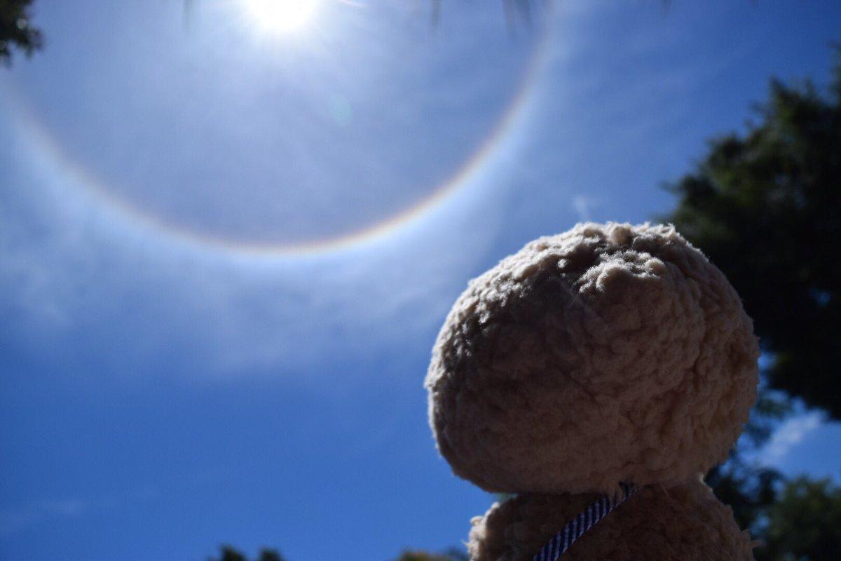 test ツイッターメディア - 毎日毎日暑いですね(^^;; 熱中症には気をつけましょう。  こないだ、ぬいぐるくんと散歩中に、太陽の周りに丸い虹が🌈✨ ぬいぐるくん、まぶしそうに見ていました(^ ^)  #東京トガリ  #ぬいぐるくん https://t.co/nyHsFJSMIK