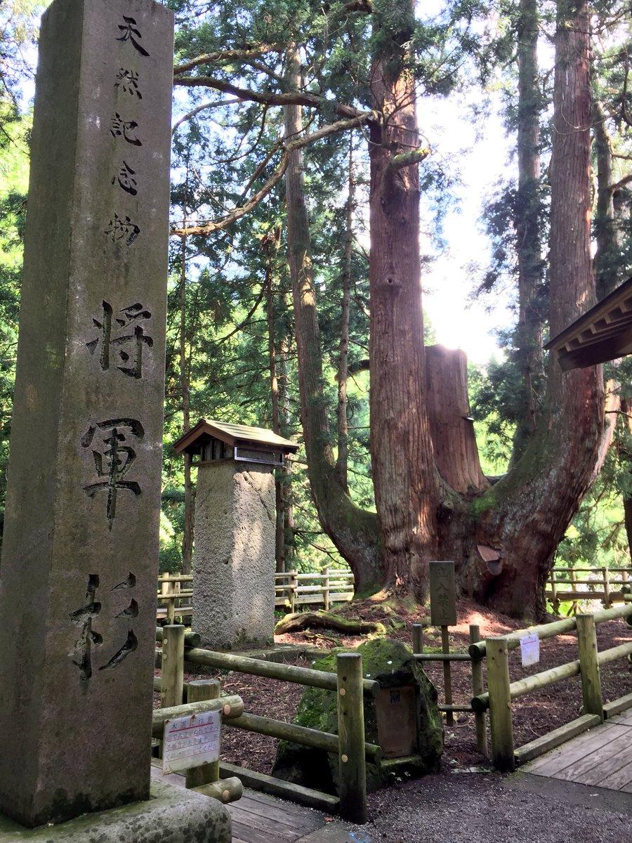 test ツイッターメディア - 阿賀町帰省中に将軍杉を見てきました🌲めちゃくちゃでかいよ!2枚目の写真で私との対比で幹の太さが分かるはず!樹齢1400年…ものすごい生命力! https://t.co/lD0Go6nYJx
