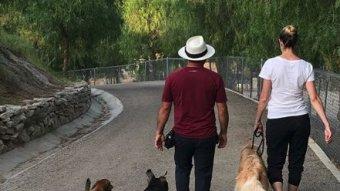 Erin Andrews' Golden Retriever Goes To Cesar Millan Training Camp