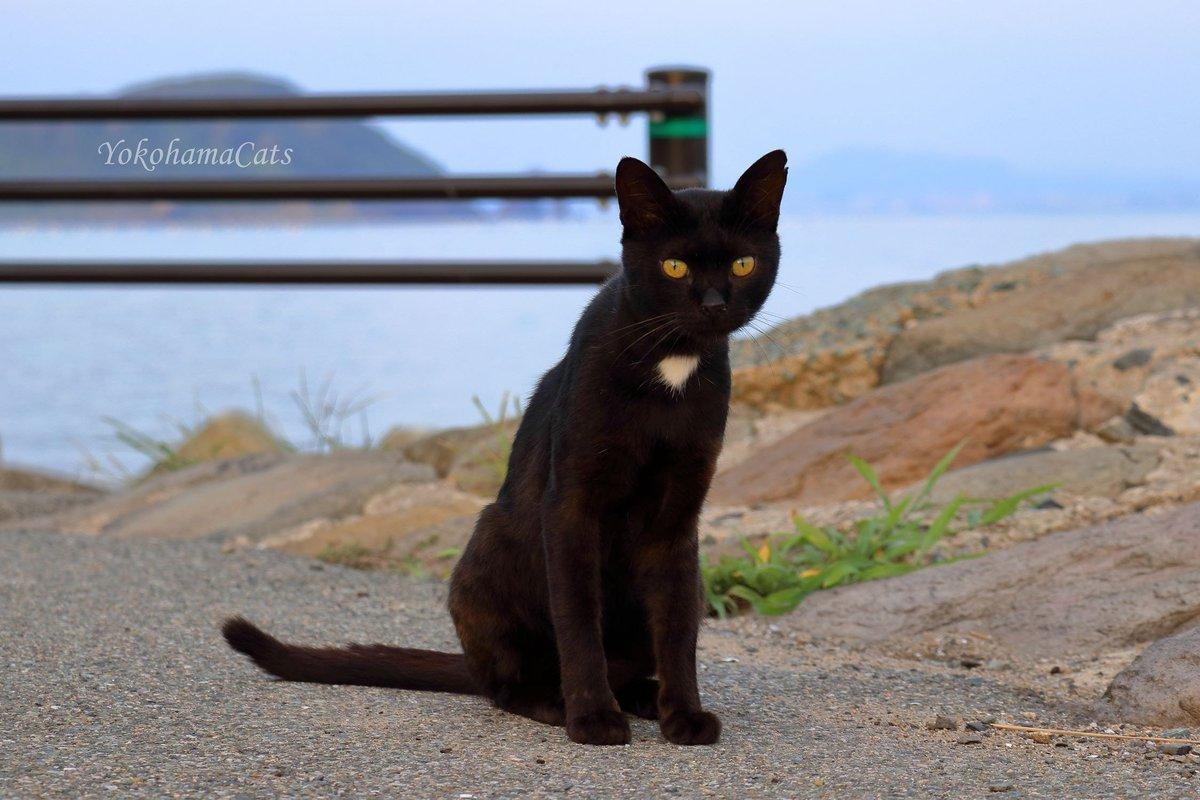 """test ツイッターメディア - 胸の白い部分が💛に見えるクロイチ君。 2018年9月29日に放送された『朝だ!生です旅サラダ』では、佐藤仁美さんが相島を訪れて""""幸せを運ぶ黒い猫 クロイチ君""""を探していました。 ちなみに相島の形も💛 🐾🐾 #相島 #しまねこ #島猫 #ねこしま #猫島 #新宮町 #佐藤仁美 #旅サラダ https://t.co/qRV80ziiql"""
