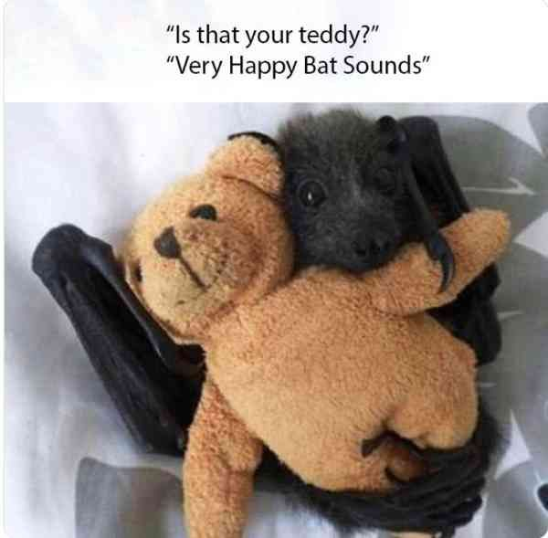 Trenduso On Twitter This Bat Is Actually Quite Cute Trenduso
