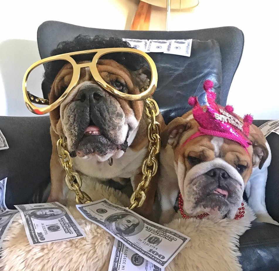 Αποτέλεσμα εικόνας για dog hamilton